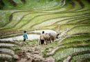 Water for Agriculture: A Case of South Asia